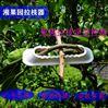 南阳梨树拉枝器可调节果树定型器